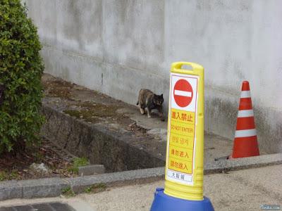大阪城公園猫