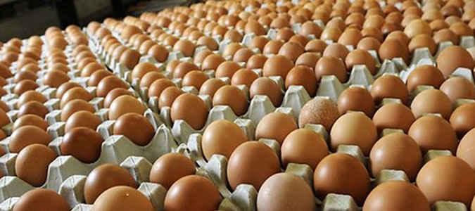 Harga daging ayam beku dan telur ayam ras yang selama ini dipasok dari Surabaya dan ditawarkan para pedagang di pasar tradisional Kota Ambon kembali naik.