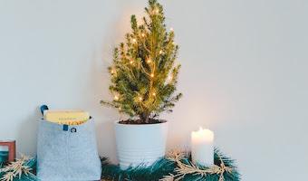 Cómo ocultar el pie del árbol de Navidad ¡10 ideas que necesitamos copiar!