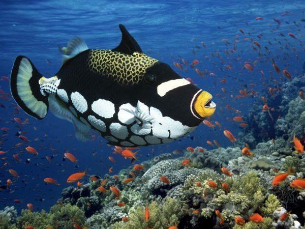 Peixes | Fishes
