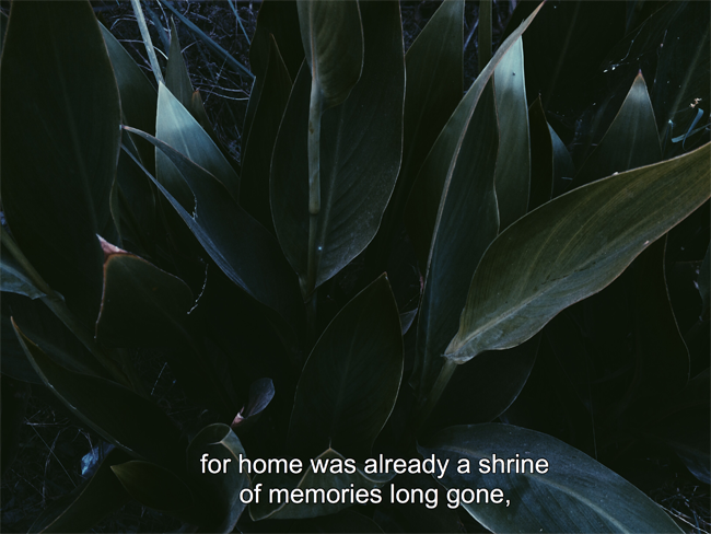 visual poetry home green leaves tumblr aesthetics noors place blog