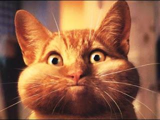 Gambar Wallpaper Kucing Lucu Banget 200024