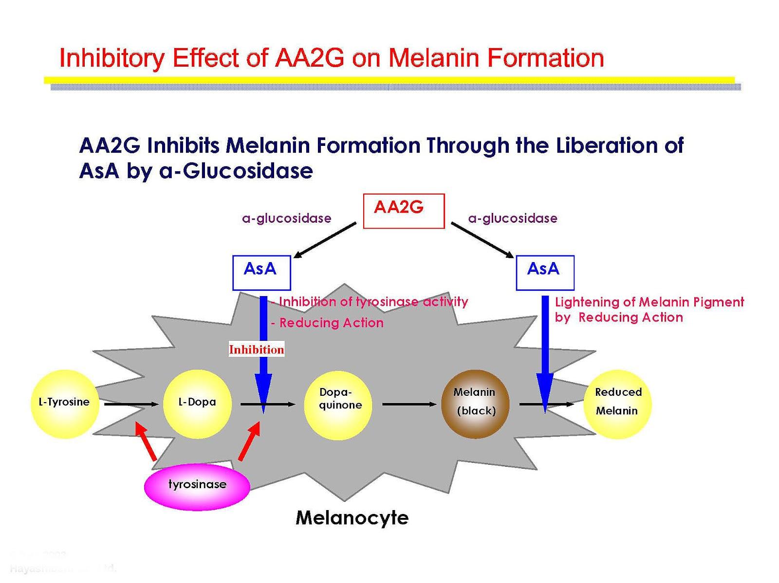 Process Production Melanin