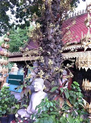 Trong sân chùa