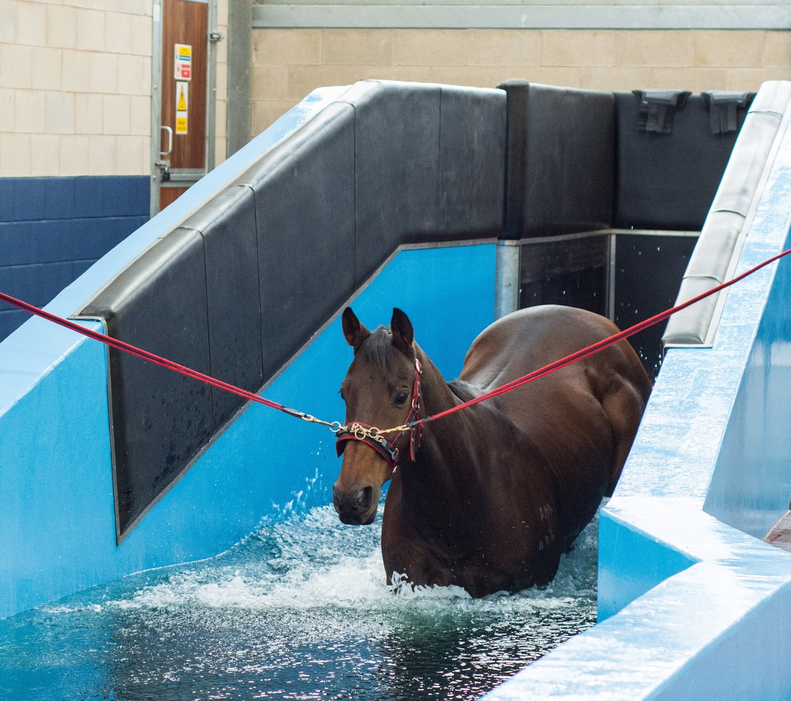 Moulton College Equine Hydrotherapy Swimming At Moulton