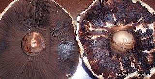 Μανιτάρια portobello