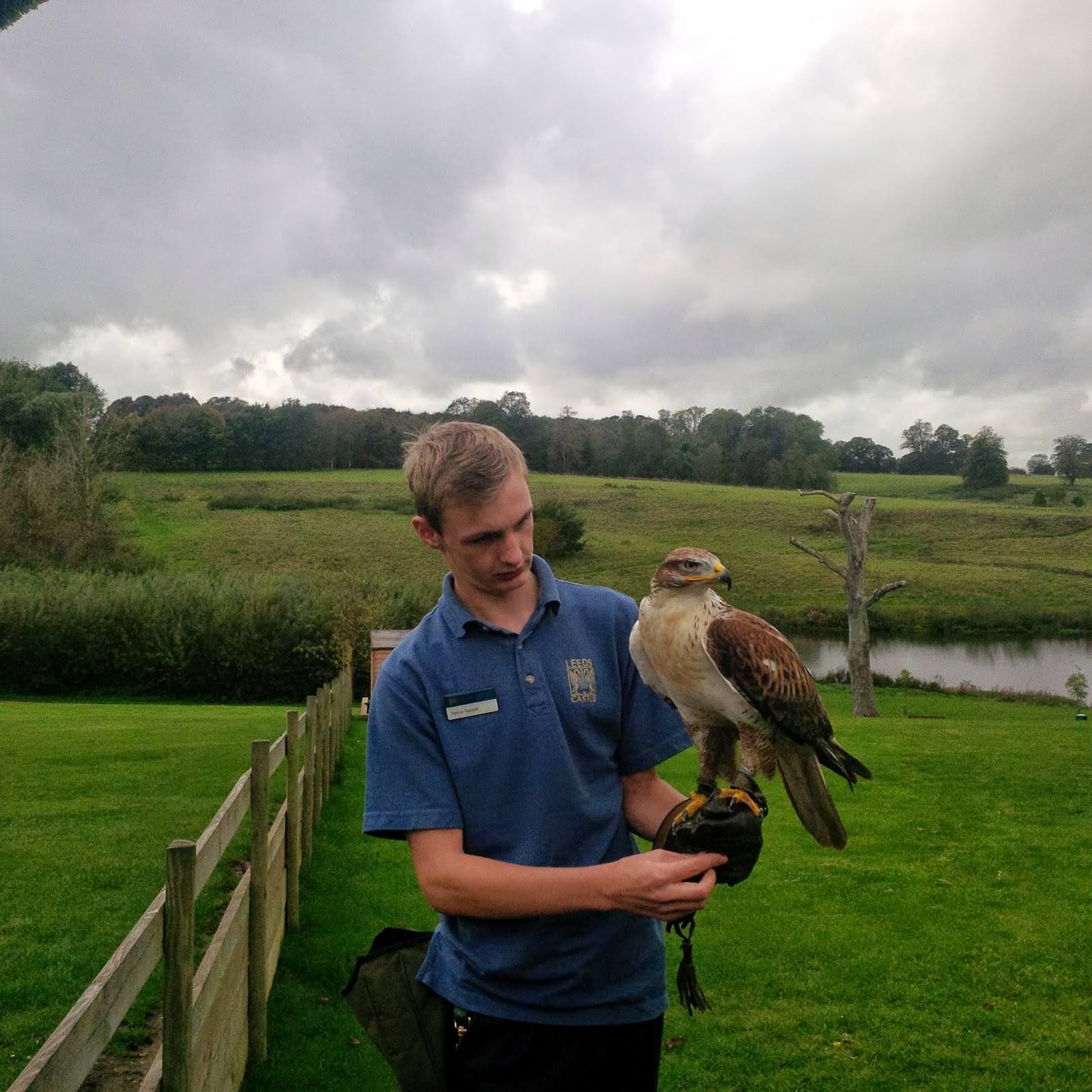 The ferruginous buzzard and his handler at Leeds Castle