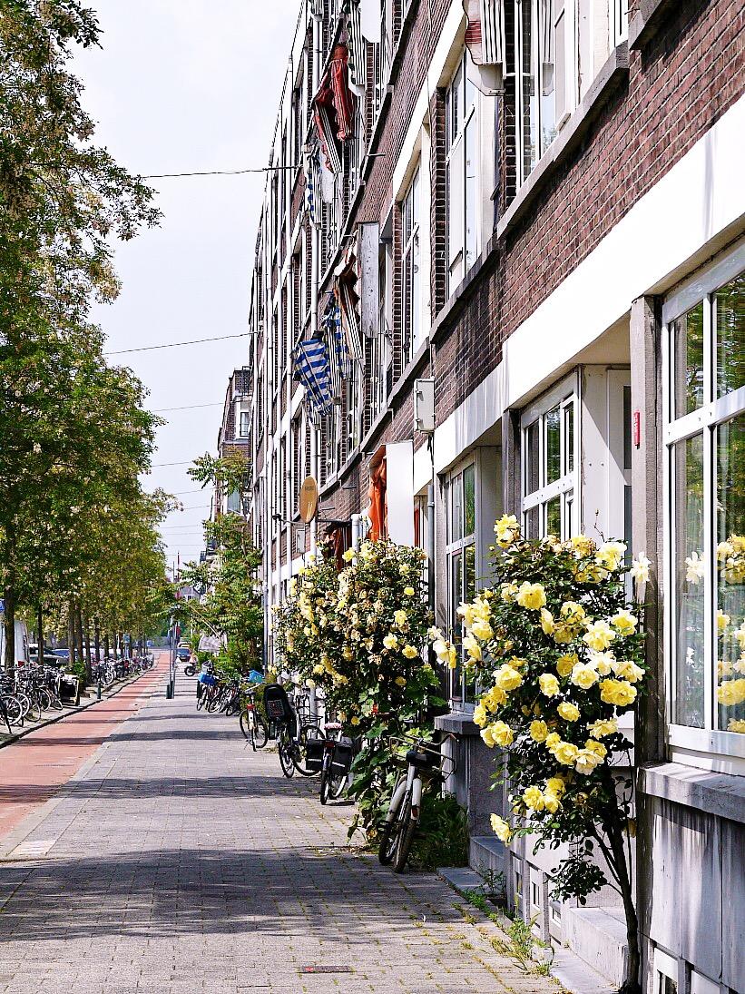 Straßen in Rotterdam. Reiseblog