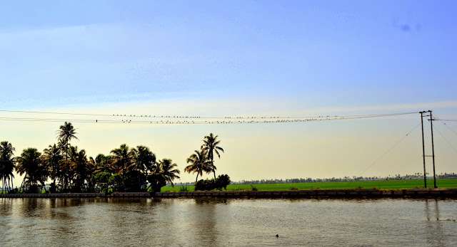 Alappey backwaters - Kerala