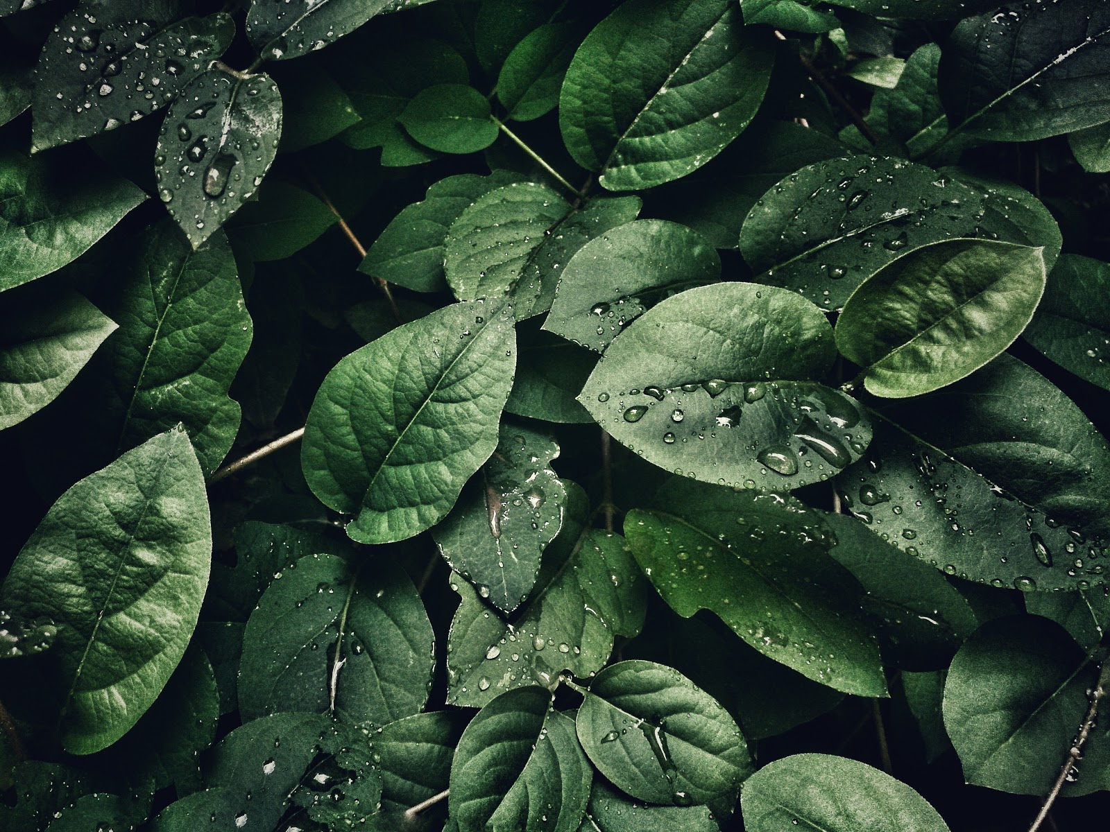Close Up Photography of Leaves with Droplets