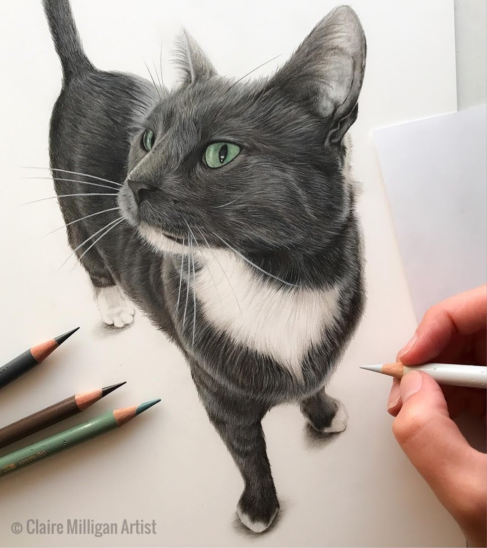 03-Socks-Claire-Milligan-Cats-birds-and-Dogs-Realistic-Animal-Drawings-www-designstack-co