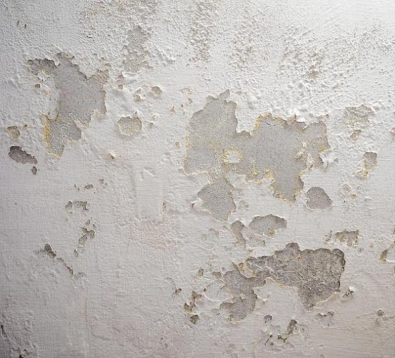 Odgrzybianie i usuwanie grzyba i pleśni ze ścian - wilgoć w domu
