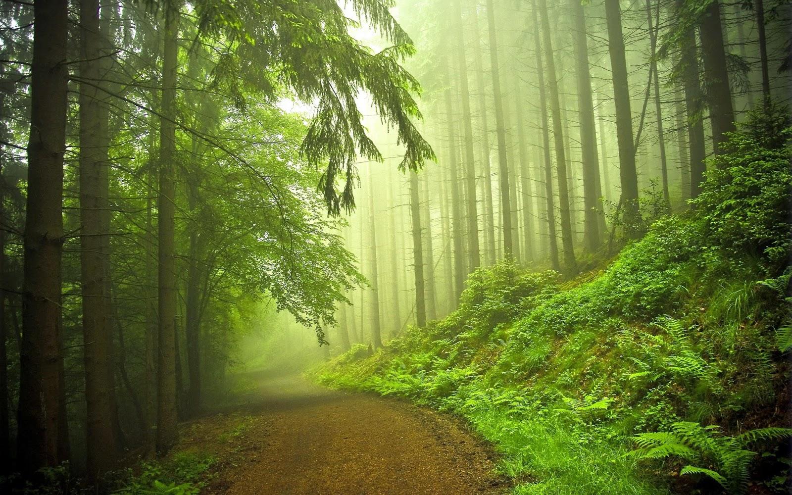 44 Top Gambar Pemandangan Alam Real