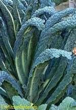 Tusken Kale