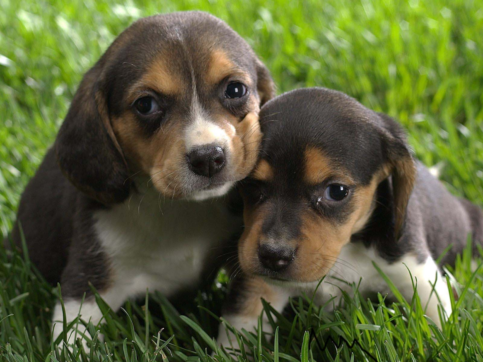The Cute Dogs And Puppies, Nice Wallpapers