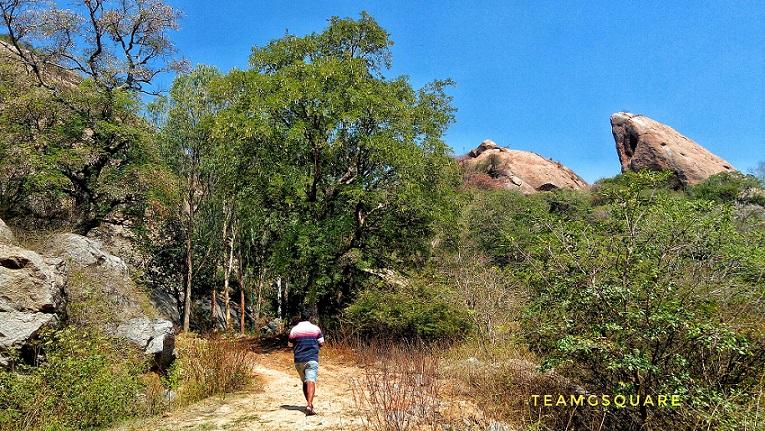 Tamarind Tree Groove