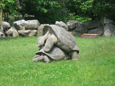 zoo-praga-broastele-testoase