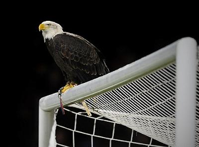 Birds, inspiration,inspired, European, football, soccer, clubs.