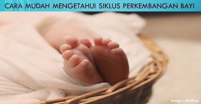 Cara Mudah Mengetahui Siklus Perkembangan Bayi - Blog Mas Hendra
