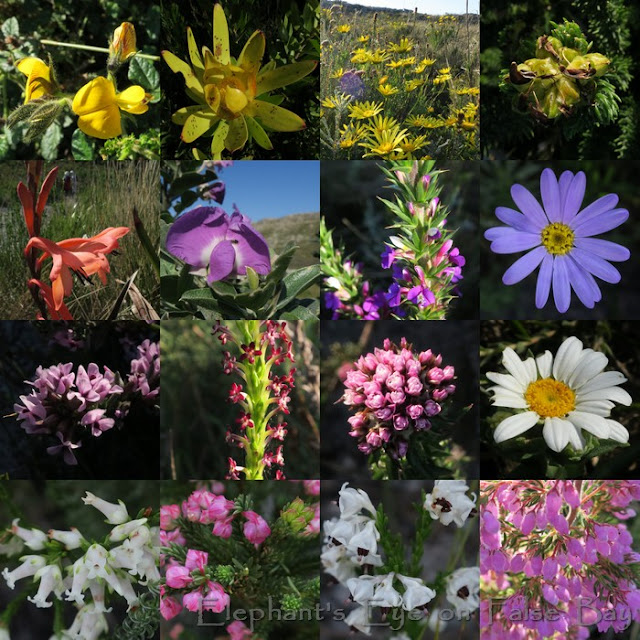 Wildflowers at Steenberg in July