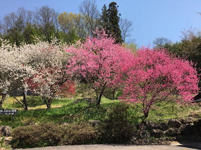 大法寺駐車場の花
