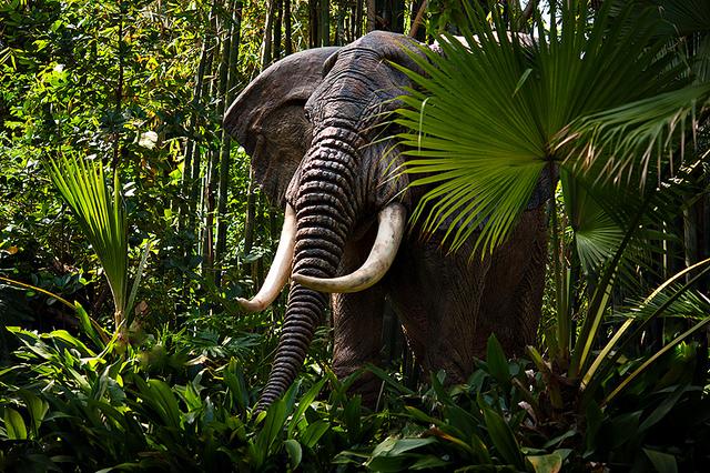 African Jungles | Wild Life Adventures
