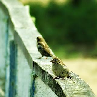 Pássaros no atracadouro da Praia da Picada, Barra do Ribeiro