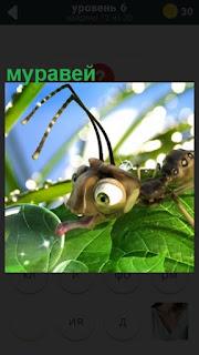 по листочку ползет муравей с крупными глазами и усами