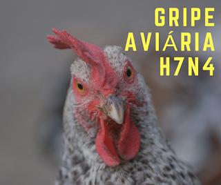 Gripe aviária H7N4