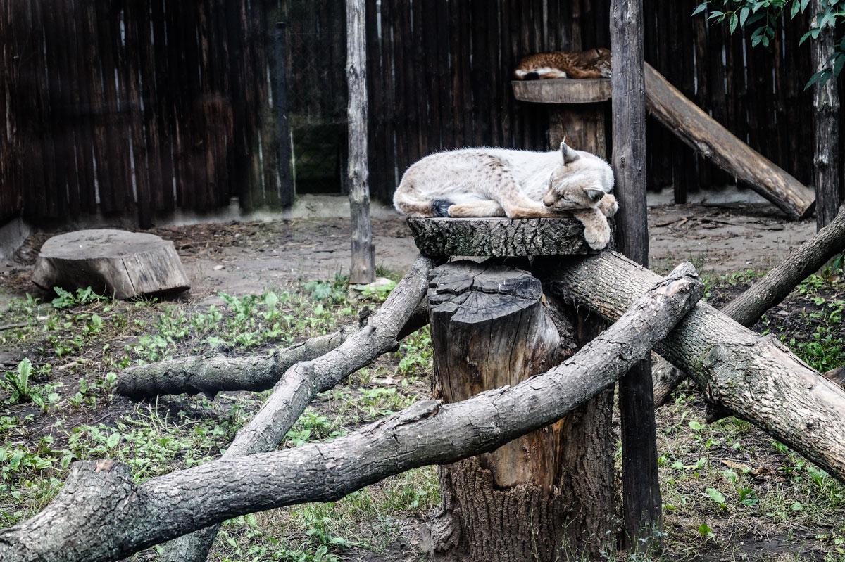 Zoo_w_Zamosciu_co_zwiedzic