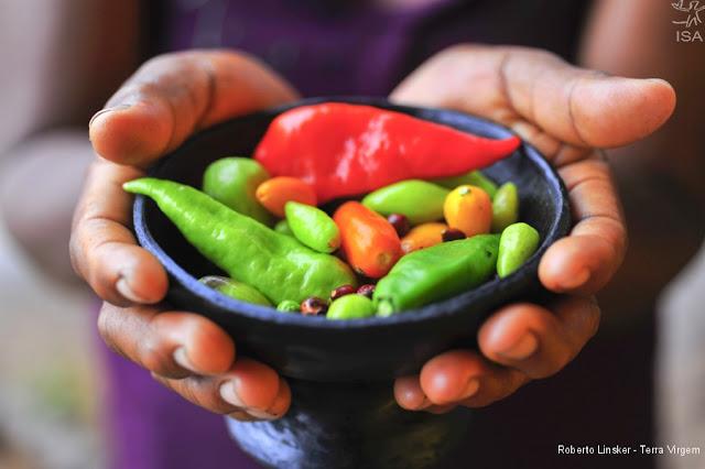 mãos segurando uma cumbuca com pimentas