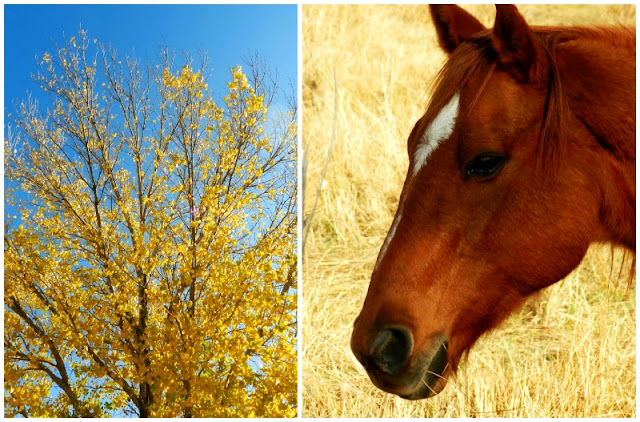 fall landscape and horse
