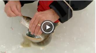 pêche sur la glace, pêche blanche, pêche Daniel Lefaivre