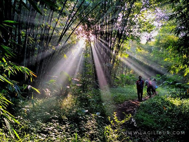 Hutan Bambu Desa Wisata Sanankerto