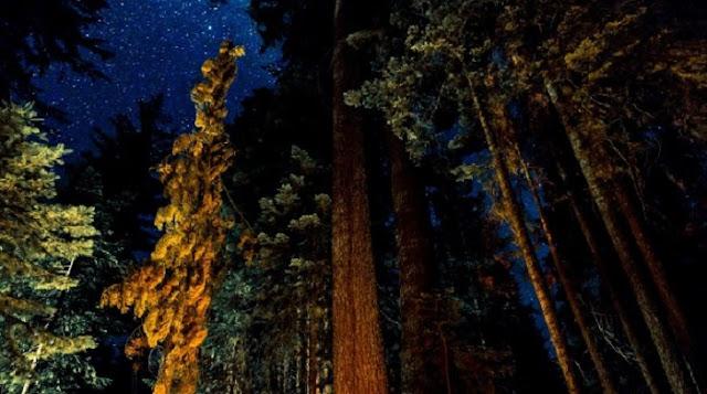 Noite no Big Basin Redwoods State Park em Santa Cruz