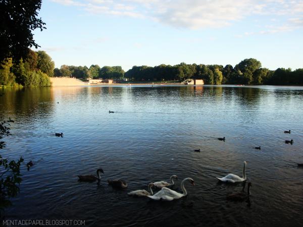 Cisnes en la laguna del Stadtpark