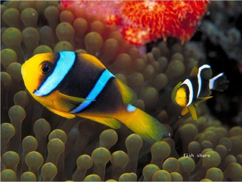 GAMBAR Jenis-Jenis Ikan