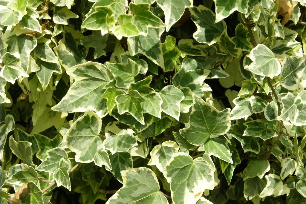 alalumieredunouveaumonde ces plantes sont des bombes oxyg ne ayez au moins l une d elles. Black Bedroom Furniture Sets. Home Design Ideas