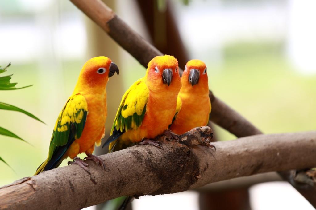 parrots wallpaper bird - photo #10