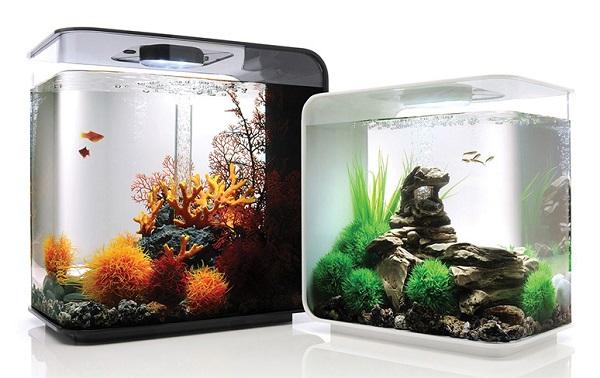 Aquarium Mini Biorb - Budidaya Ikan