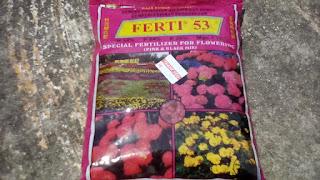 Tanaman Pokok Bunga Kertas (bougainvillea) Sebagai Penyei Laman