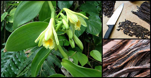 Vanilla: How It Benefits Our Health