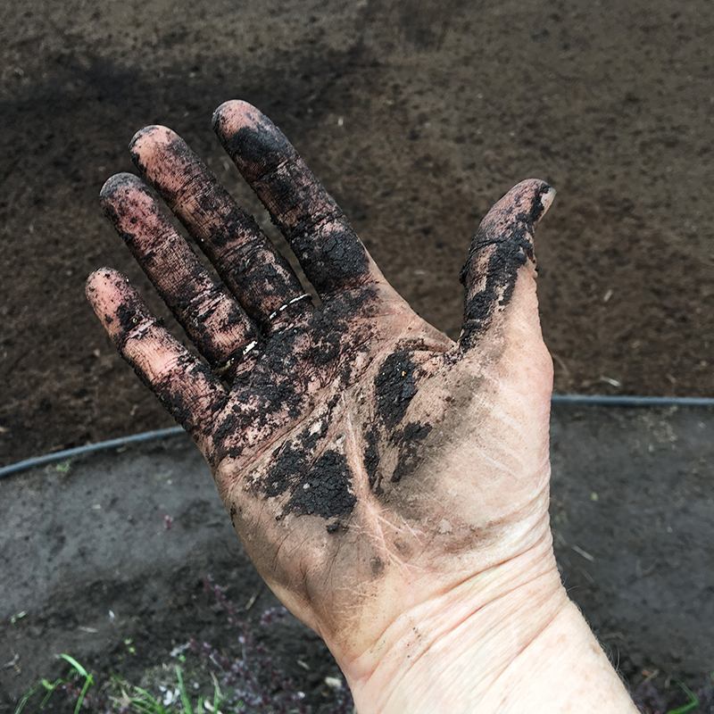 Hand covered with compost after seeding