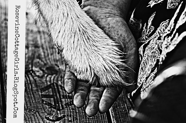 Dog paw in a girls hand | rosevinecottagegirls.com | Looking Back