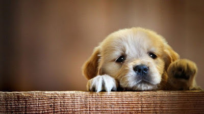 Buying a New Puppy? How to Avoid the Pitfalls