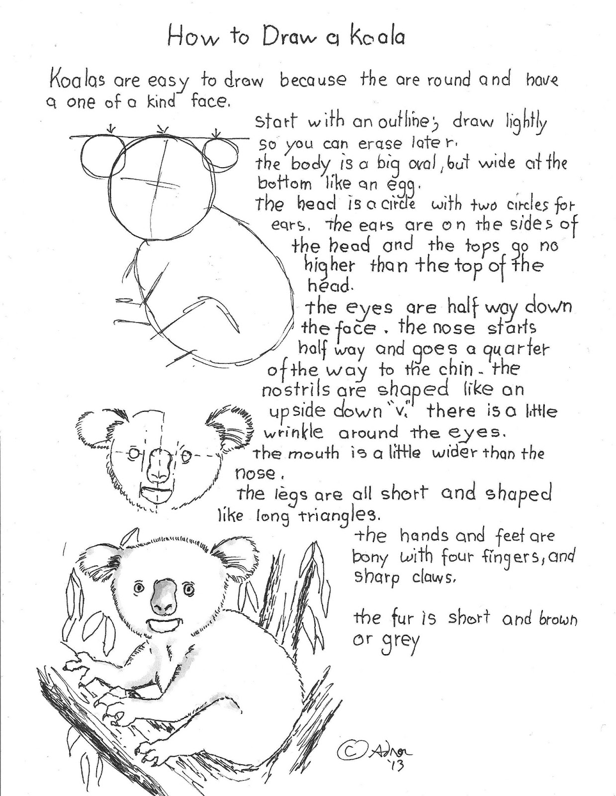 How To Draw Worksheets For The Young Artist How To Draw A Koala Worksheet