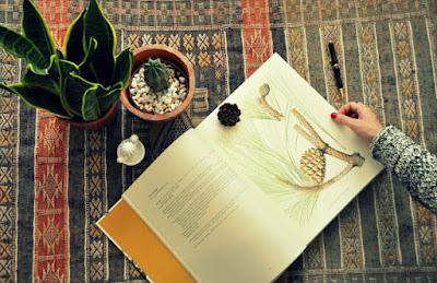 libro de botanica de gran canaria dibujo de mary annie Kunkel