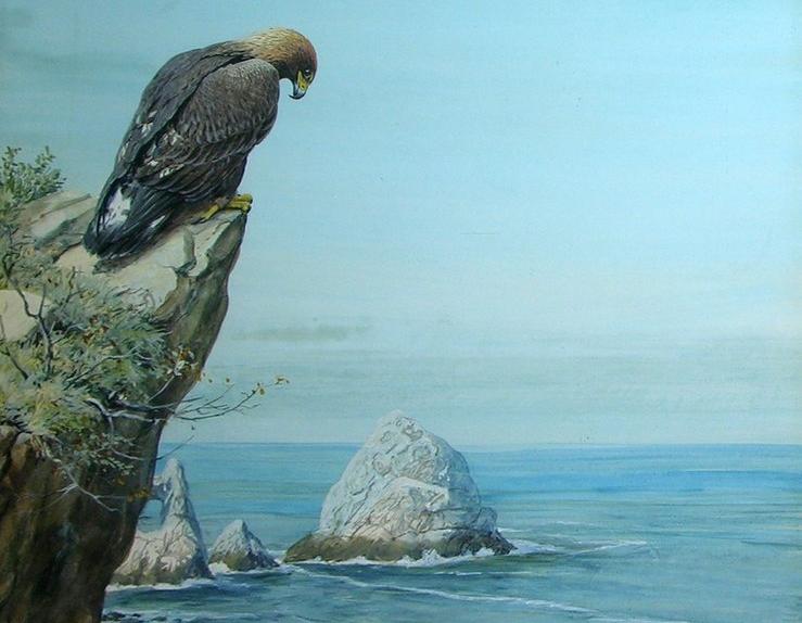 Fred the Golden Eagle update; What a Shambles | David Adam Sketchbook