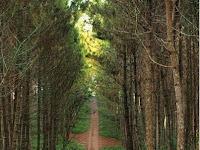 Lokasi dan Rute Menuju Puncak Eurad Pingping Lembang