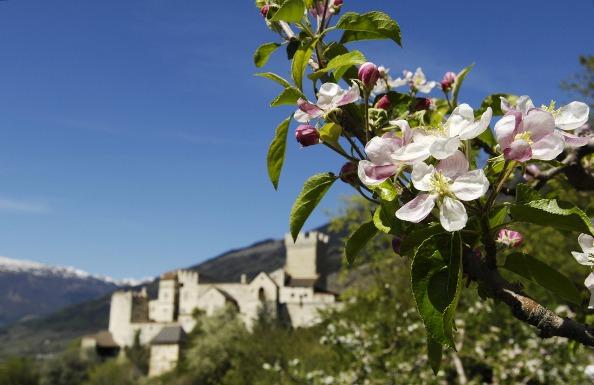 Apfelblüte mit Churburg